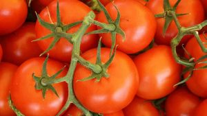 Best Fertilizers For Tomatoes