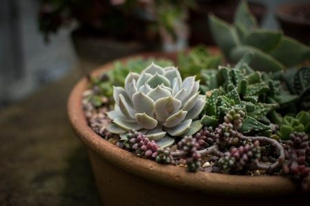 Best Fertilizer for Succulents
