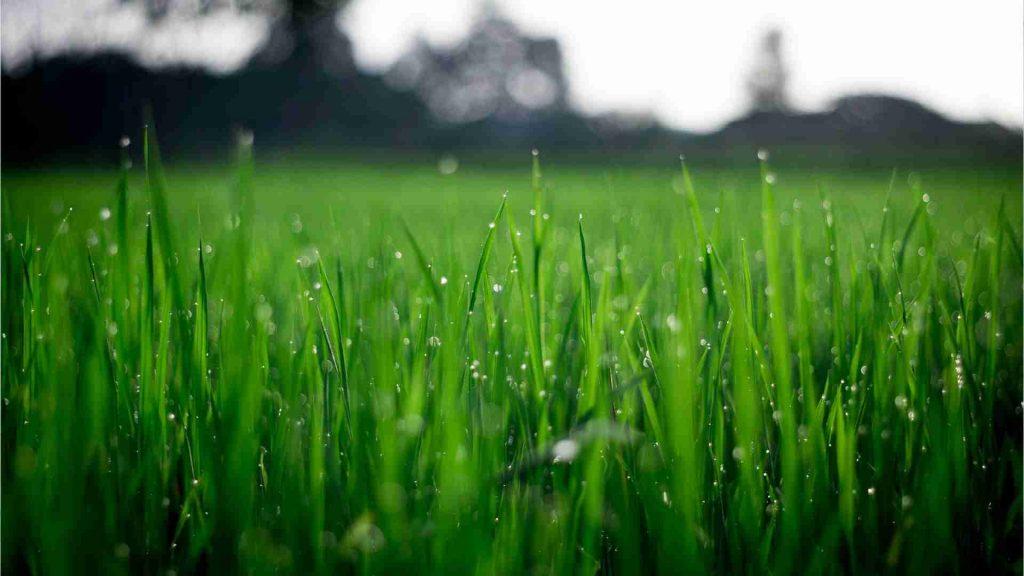 best time to fertilize lawn