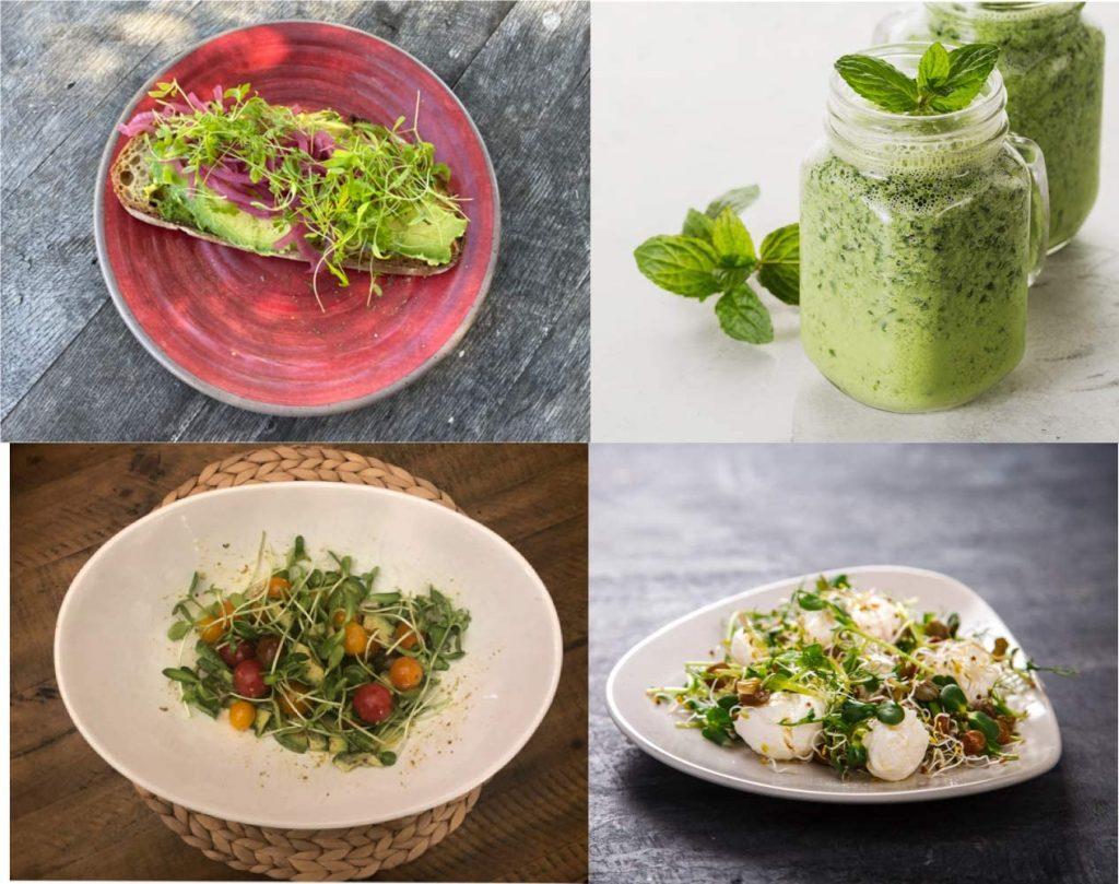 best microgreens starter kits