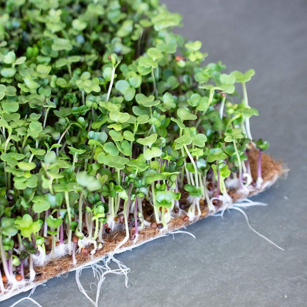 best microgreen grow mats