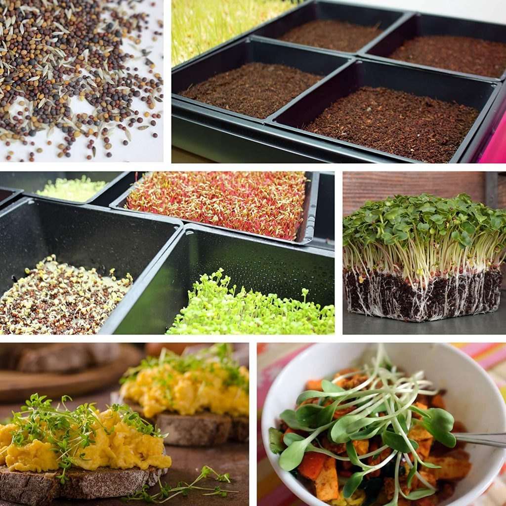 microgreen growing trays