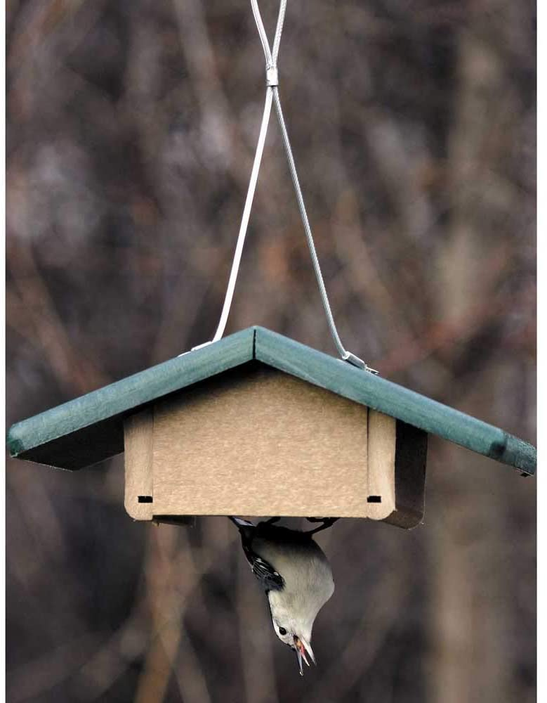 best upside down suet feeder