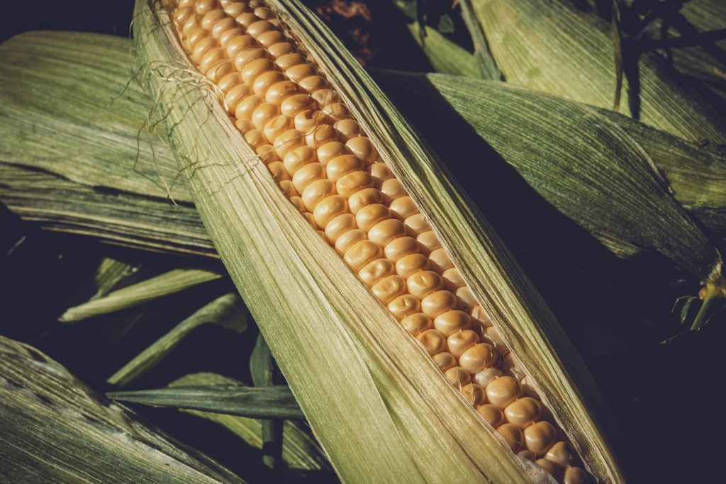 best fertilizer for corn