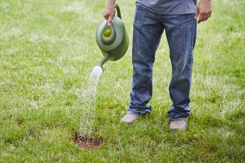 best fertilizer for centipede grass