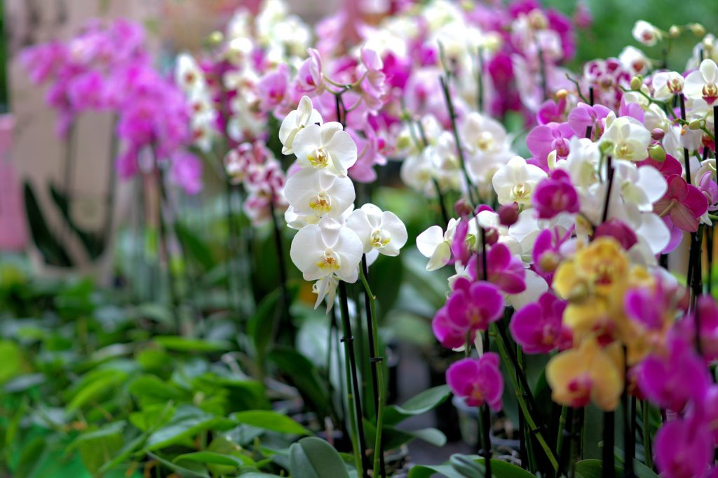 best fertilizers for orchids