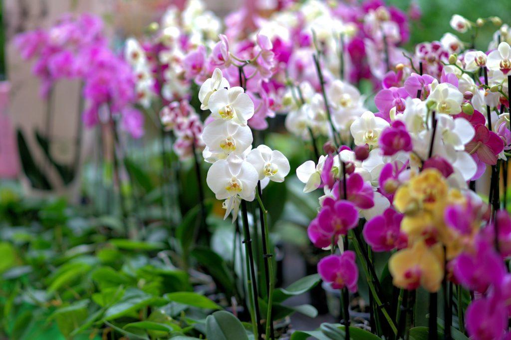 best fertilizers for orchids