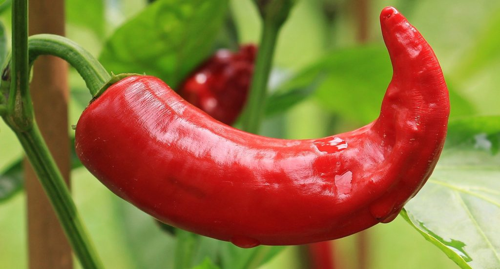best fertilizer for peppers
