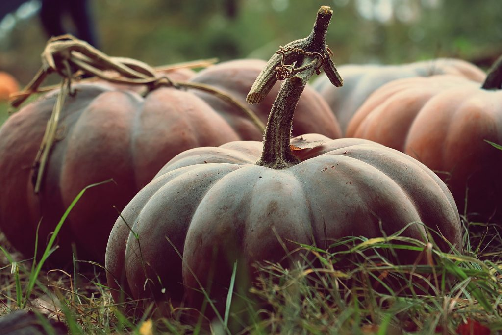 best fertilizer for pumpkin