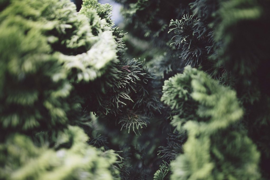 best fertilizer for evergreens