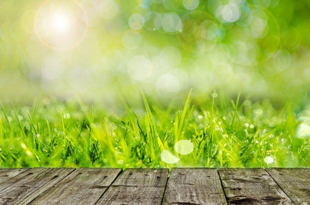 best fertilizer for grass