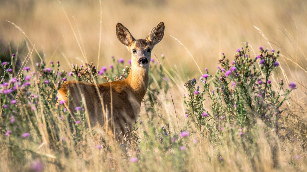 best deer repellent