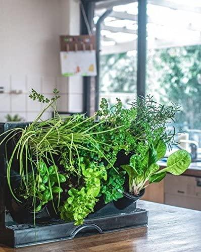 best countertop garden