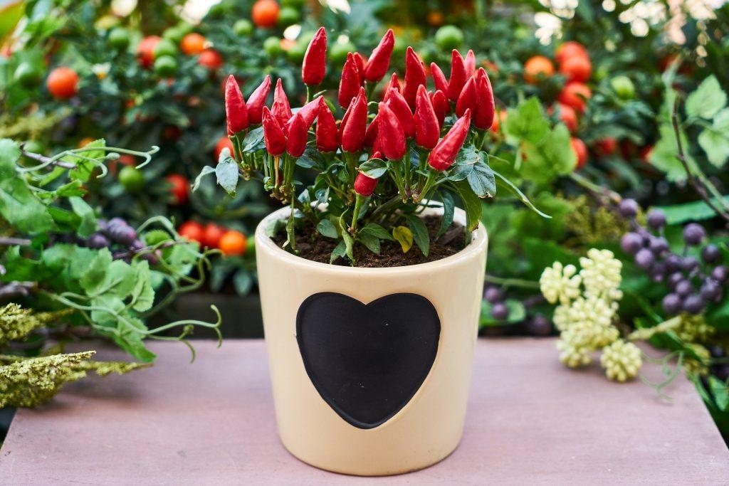 Easiest Vegetables Тo Grow In Flower Pots