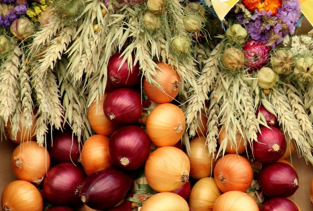 Best and Worst Companion Plants For Onions