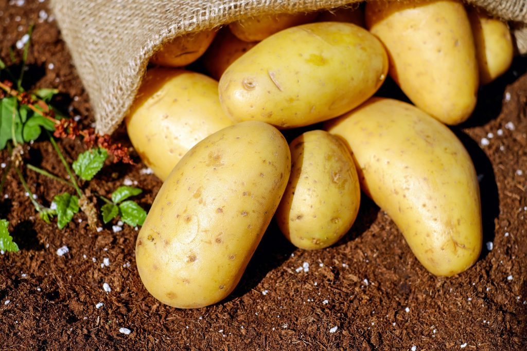 Best And Worst Companion Plants for Potatoes