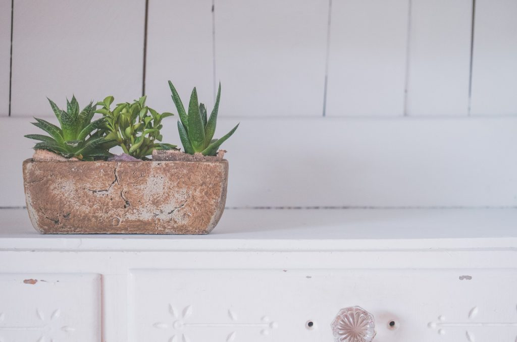Caring For Succulents Indoors