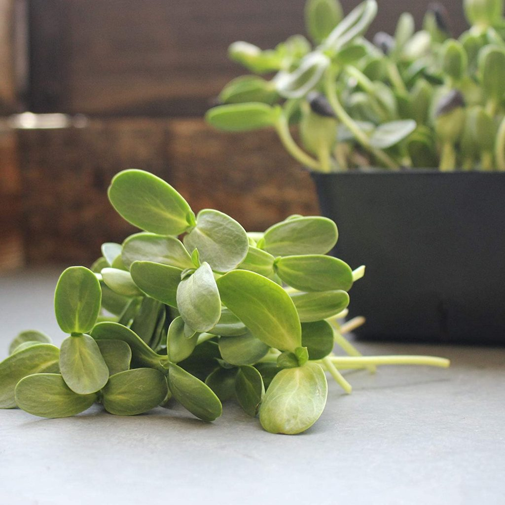when to harvest microgreens