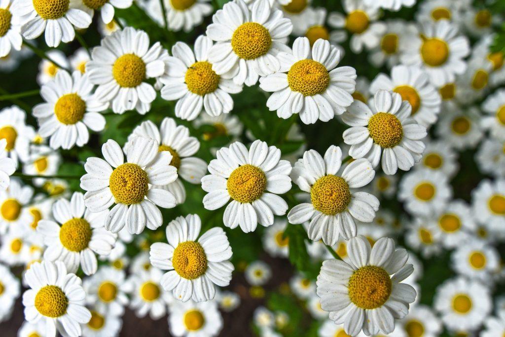 best healing plants