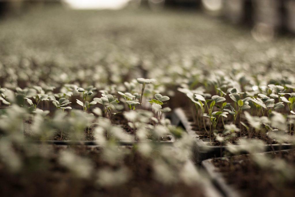 growing microgreens hydroponically